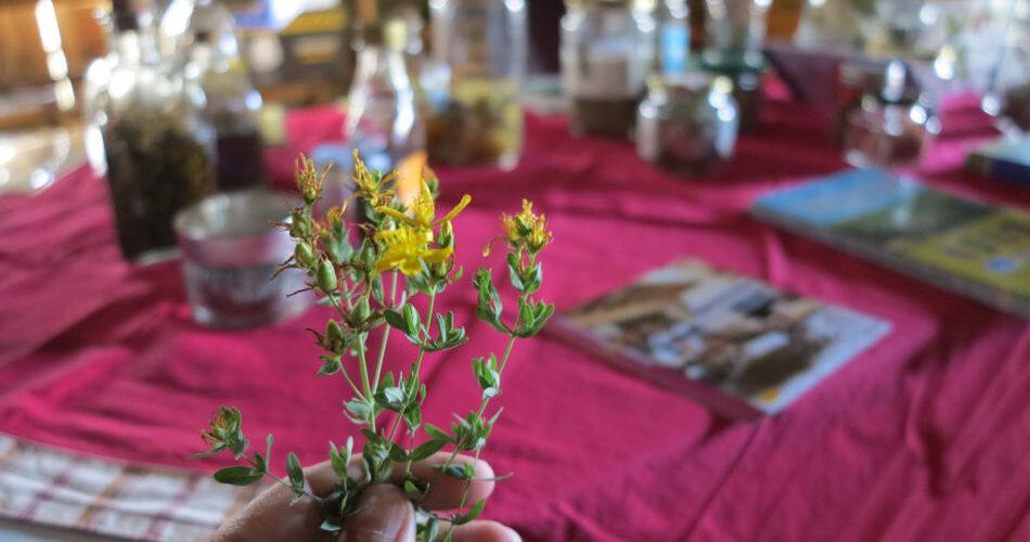 Plantes medicinals secretes